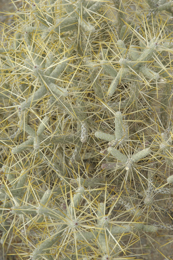 Desert Texture stock image