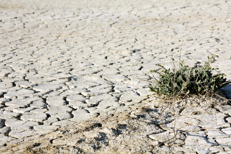 Desert texture, parched and cracked earth. Background of dry parched and cracked soil of the earth, texture of clay fissures desert stock photography