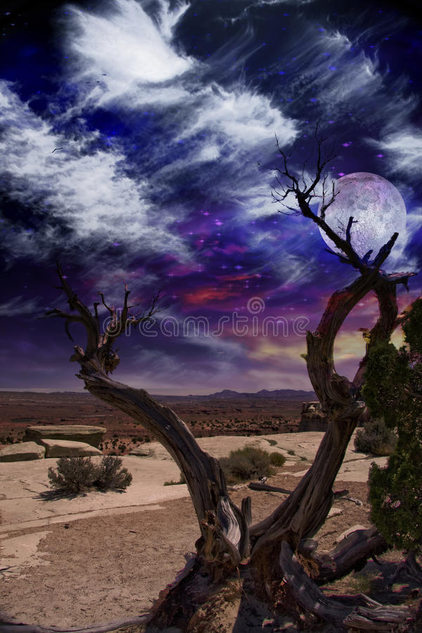 Download Desert Tree stock illustration. Image of night, photography - 21921138