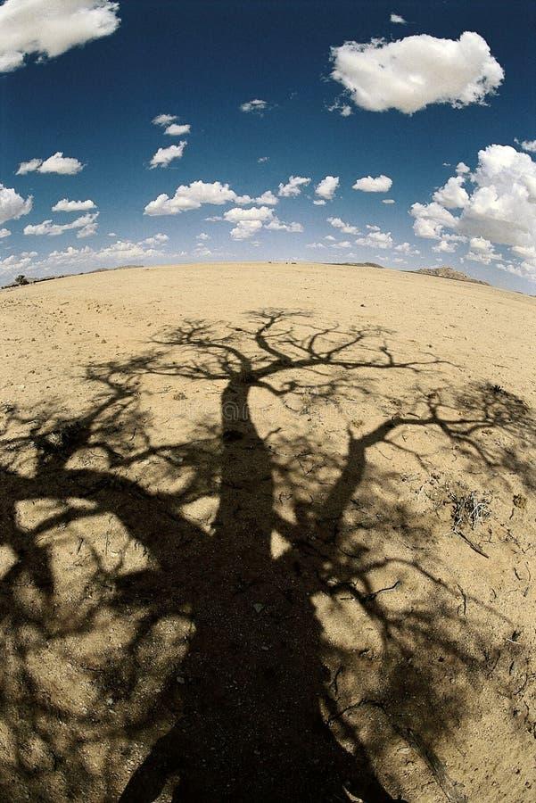 Desert tree shadow stock image