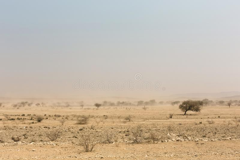 Desert trees in front of a white sand storm, Namib, Naukluft Par stock photo