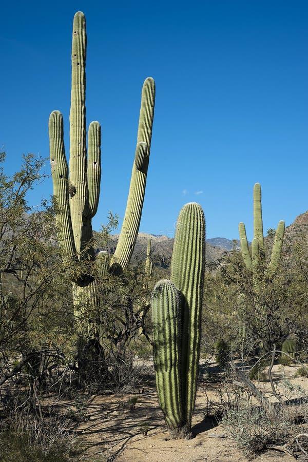 Free Desert Vegetation Royalty Free Stock Photo - 23891095