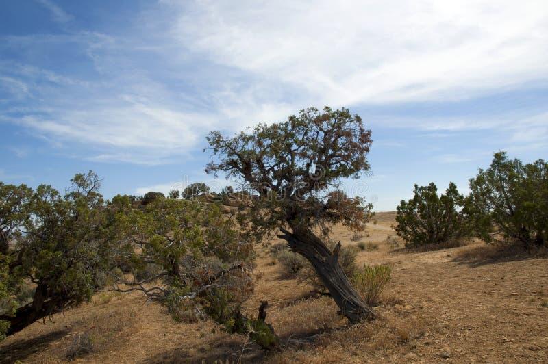 Desert vegetation royalty free stock image