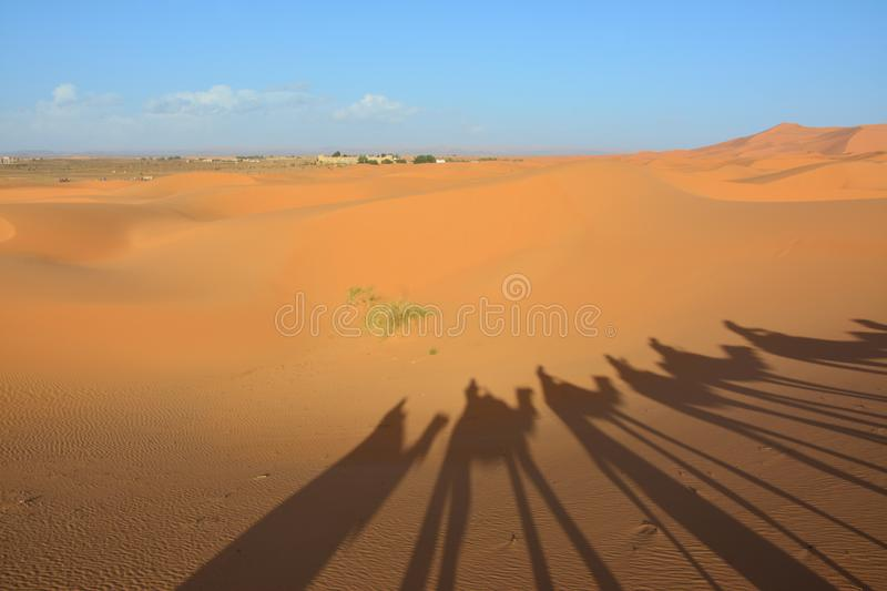 Desert, people on camels, the Western Sahara in Morocco. Africa. Desert, the Western Sahara in Morocco. Africa royalty free stock images
