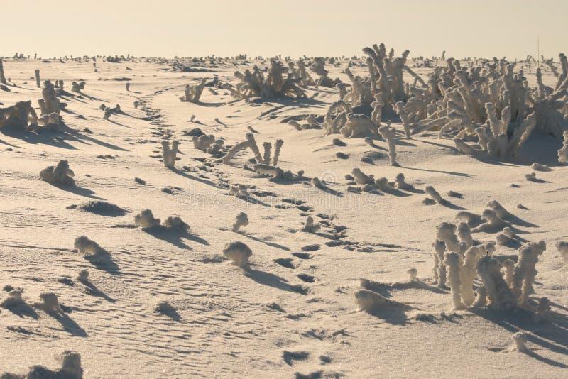 Desert in white royalty free stock image