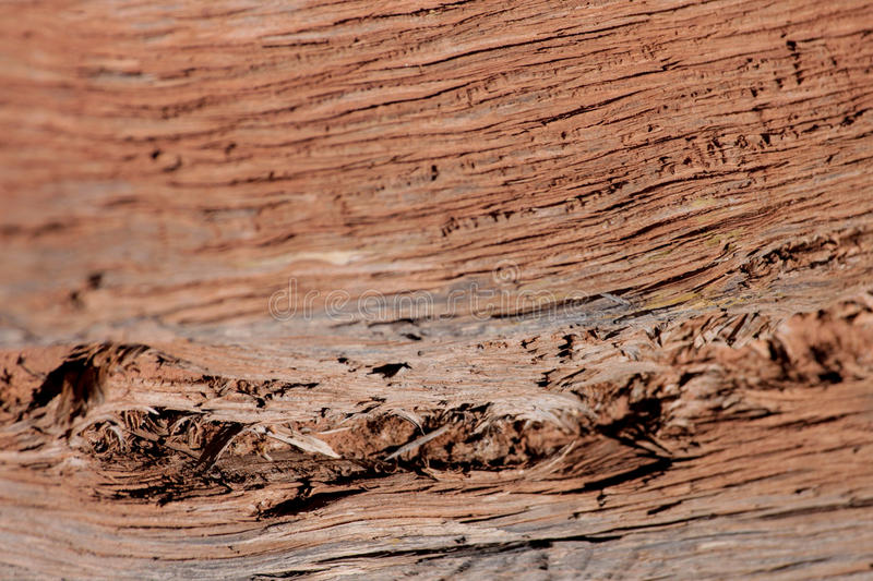 Desert Wood stock photography