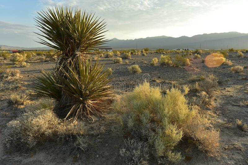 desert yucca plant under white and gray clouds blue sky over mojave