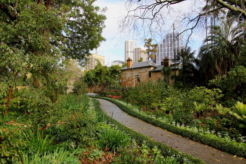 Download Oasis In Big City Footpath In Park Stock Image - Image of nobody, rainy: 20548687