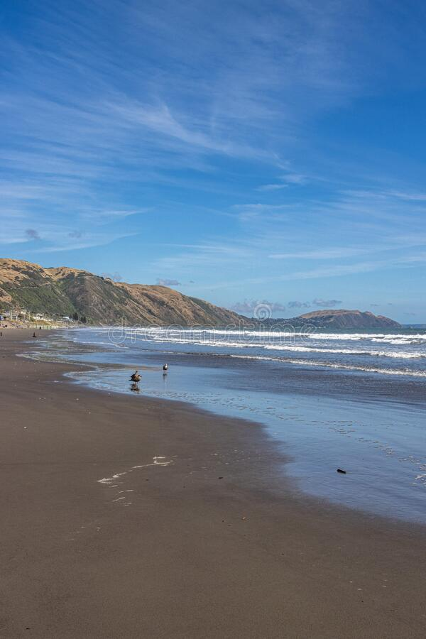 Deserted beach except for the seagulls at Paekakariki near Wellington, New Zealand. Black sand beach on west coast of New Zealand near Wellington, populated only royalty free stock photography