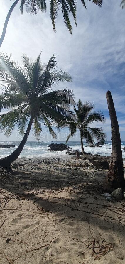 Deserted beach with palmtrees stock images