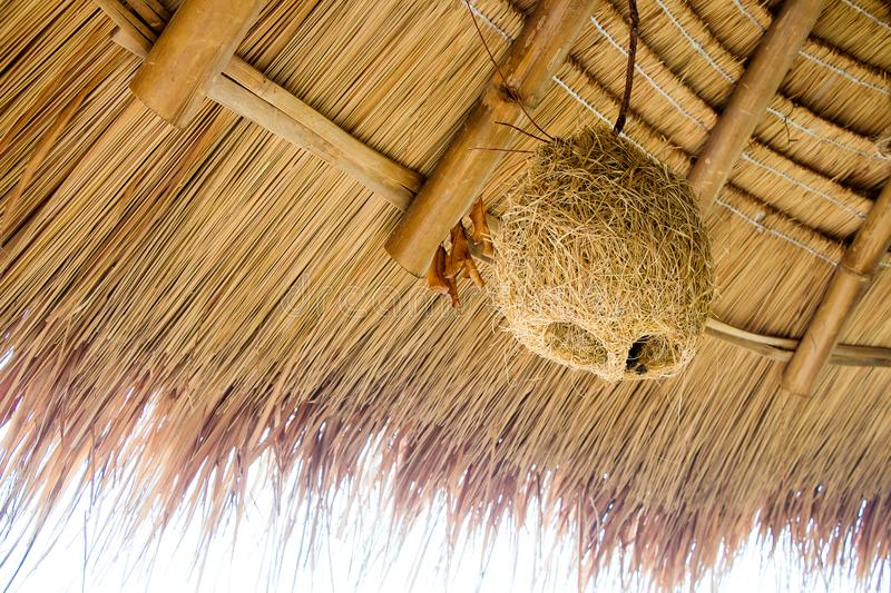 Deserted bird nest hang on the grass roof for decorative interior. Tropical interior style. nature decorative. house of bird. grass house bird stock images