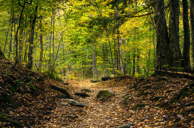 Deserted Forest Path stock photography