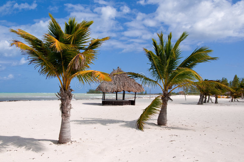 Download Deserted Hut And Palm Trees Stock Image - Image: 4029313