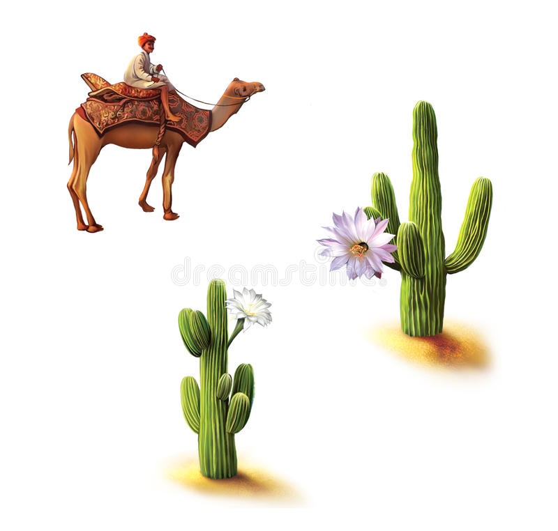 Desertera beduinen på kamlet, saguarokaktuns med blommor, Opuntiakaktuns, naturlig livsmiljö vektor illustrationer