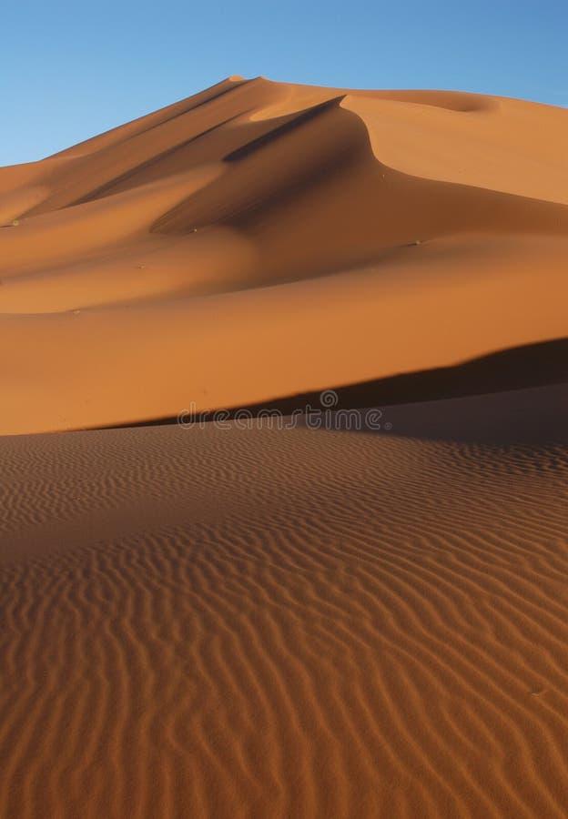 desertera sahara royaltyfri foto