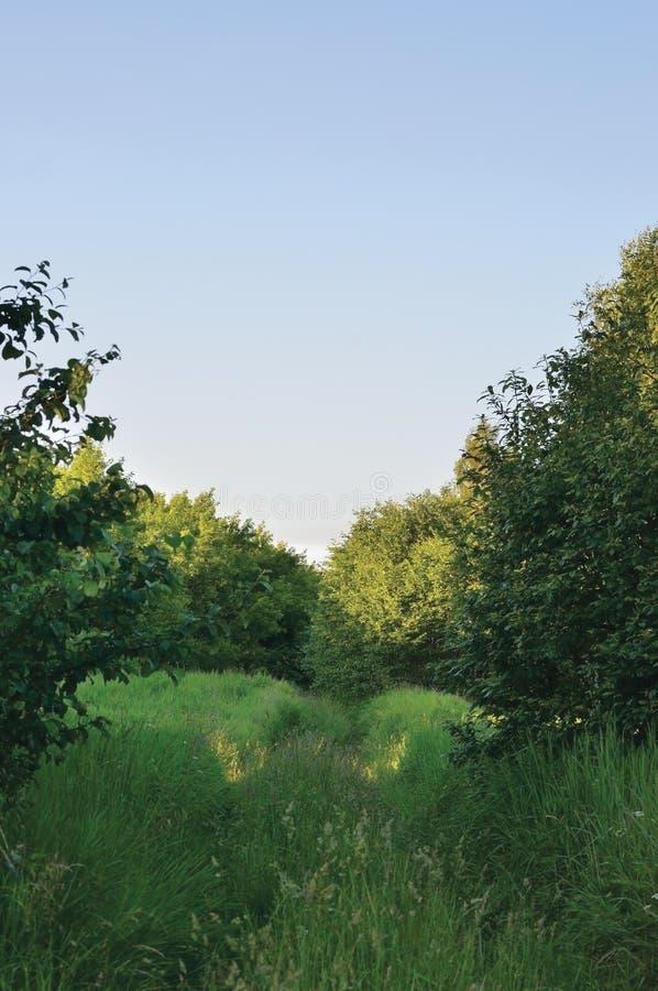 Deserterat övergett grönskande lantligt perspektiv för slinga för trälandsväg, medelspår i bevuxet löst gräs och träd, by fotografering för bildbyråer
