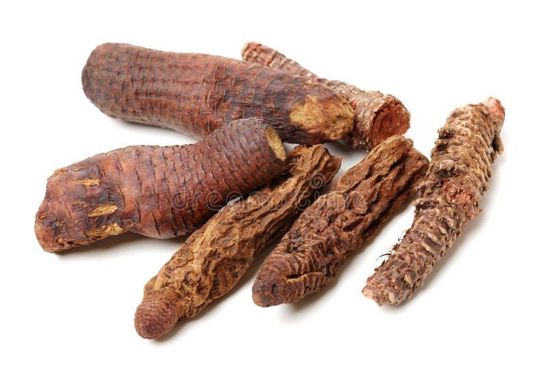 Deserticola chino tradicional mA de Cistanche del š del ¼ del medicineï y rosea de Rhodiola imagen de archivo