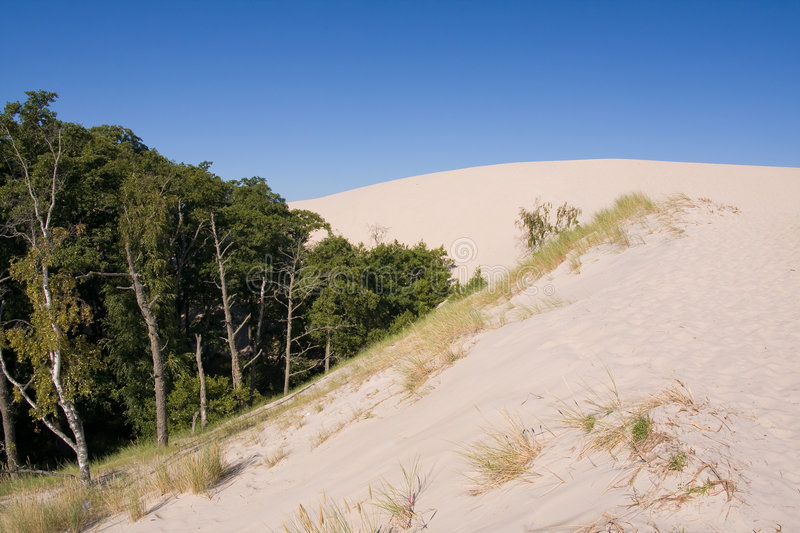 Desertification. Sand dunes eating up forest stock image
