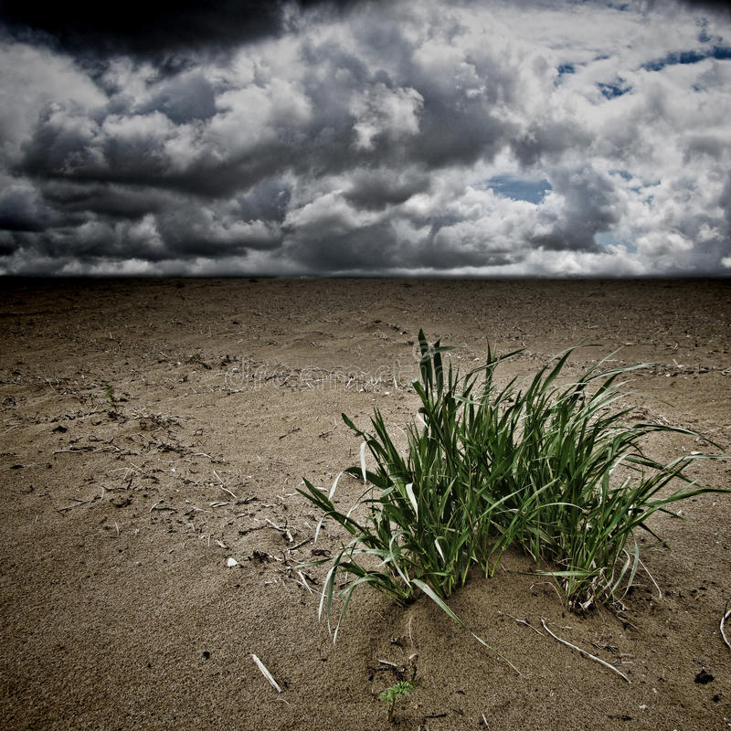 Desertification,. Dramatic landscape with grass stock photos