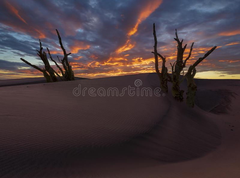 Desertification, global warming. Concept of global warming stock photography