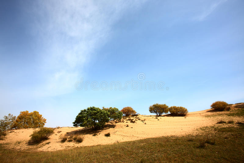 Desertification grassland. In mongolia in china stock image