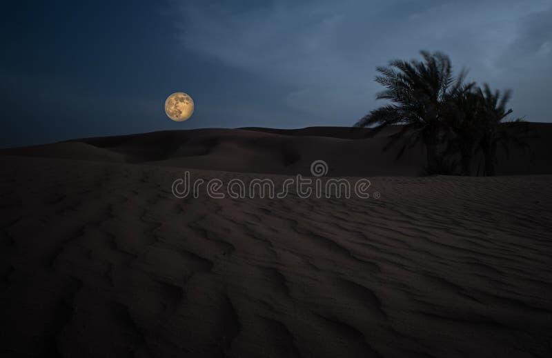 Deserto árabe contra a lua enorme foto de stock