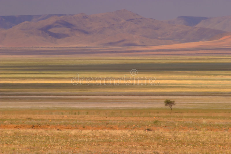 Deserto 3 foto de stock royalty free