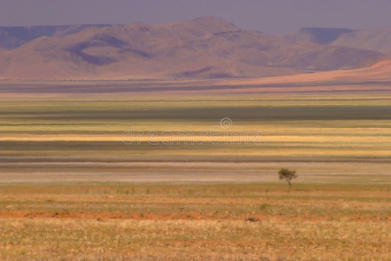 Deserto 3 fotografia stock libera da diritti