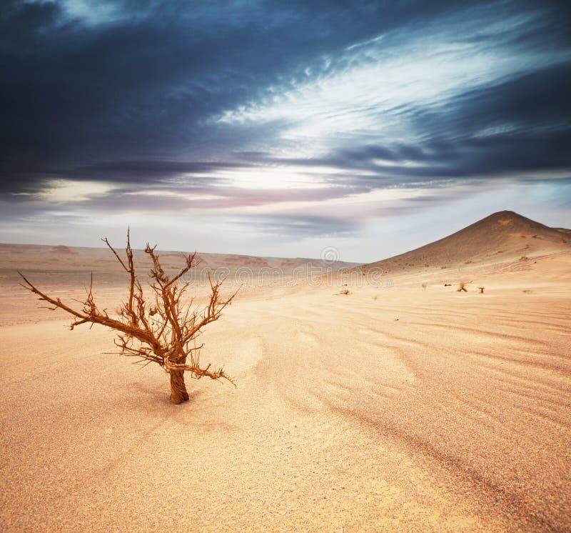 Deserto fotografia stock libera da diritti