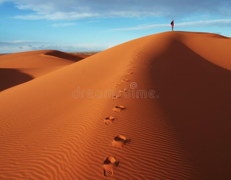 In deserto fotografia stock libera da diritti
