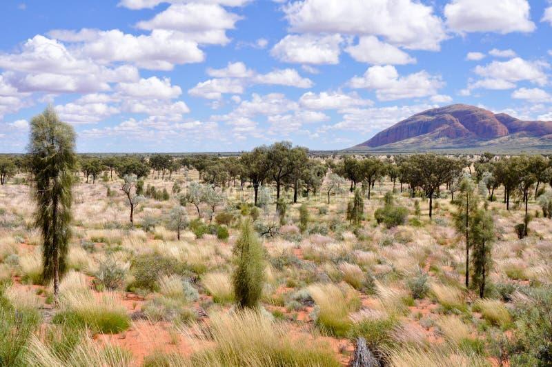Deserto australiano fotos de stock royalty free