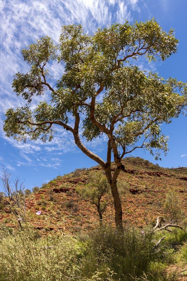 Deserto australiano, reis Garganta, Território do Norte, parque nacional de Watarrka, Austrália fotos de stock royalty free