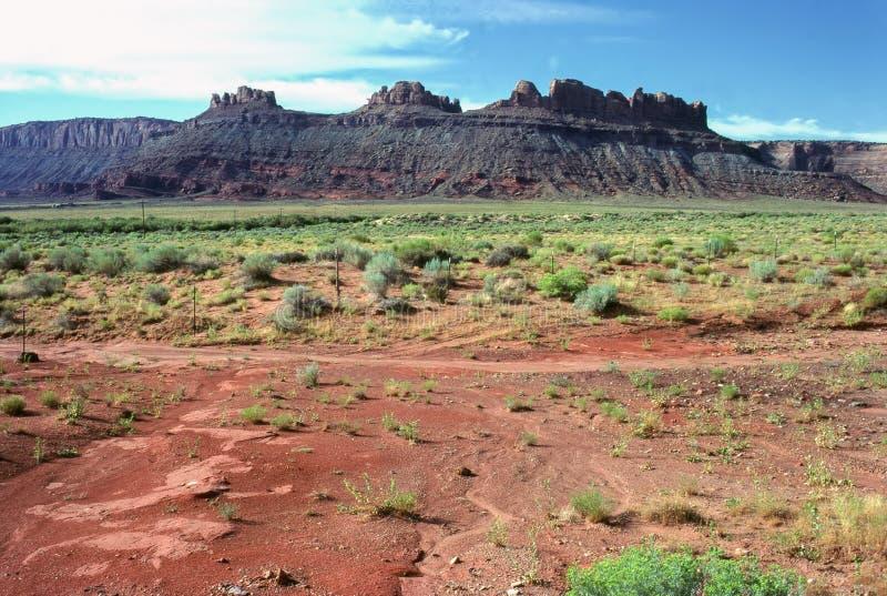 Deserto con vegetazione a Canyonlands, Utah immagini stock libere da diritti
