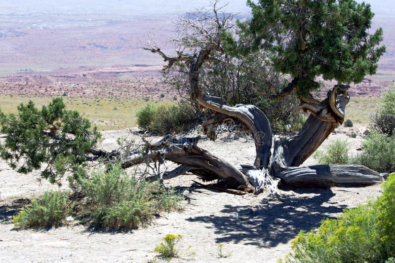 Deserto curvo fotografia stock