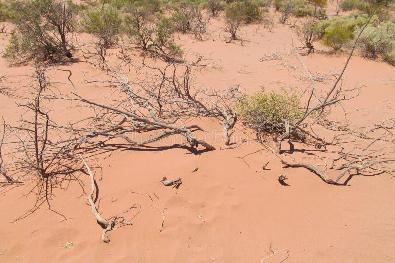 Deserto da areia com arbusto seco fotos de stock royalty free