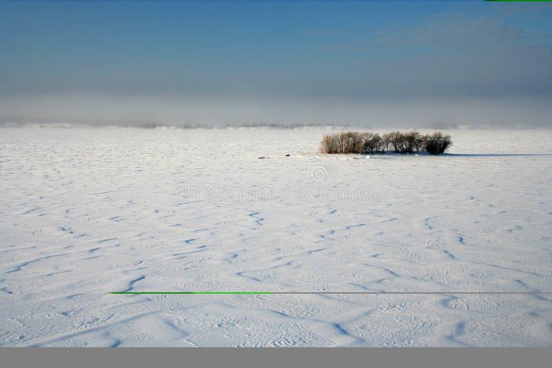 Deserto da neve fotografia de stock royalty free