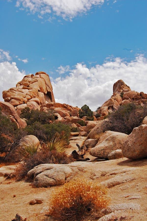 Deserto de Mojave imagem de stock royalty free
