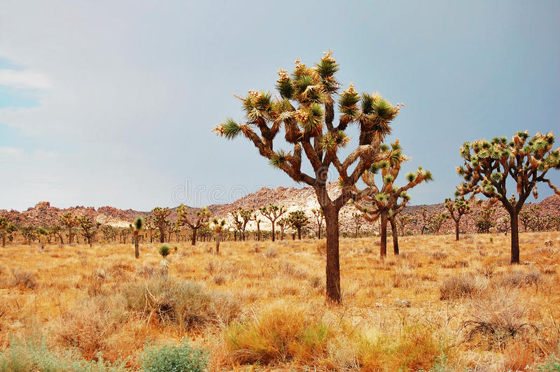 Deserto de Mojave fotos de stock