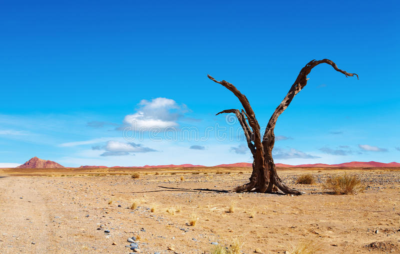 Deserto de Namib imagens de stock