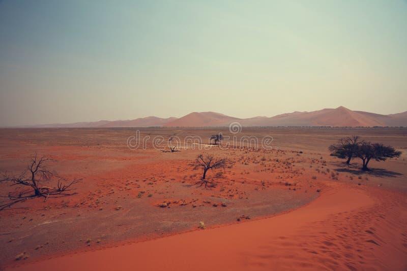 Deserto de Namib imagem de stock royalty free