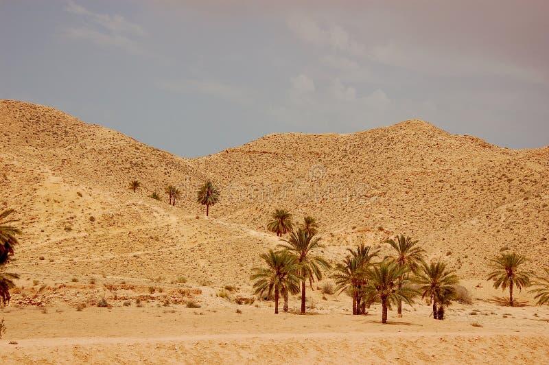 Deserto de Sahara do verão em Tunísia imagem de stock royalty free