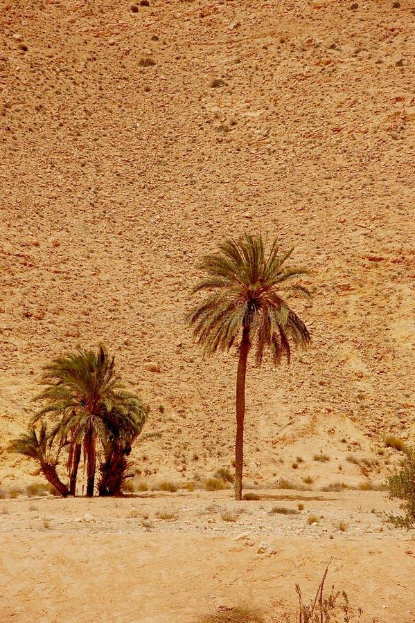 Deserto de Sahara do verão em Tunísia fotos de stock royalty free