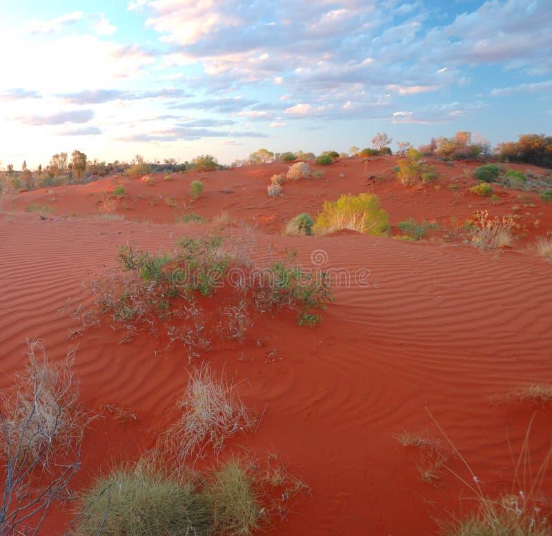Deserto de Simpson, outb de Austrália fotografia de stock