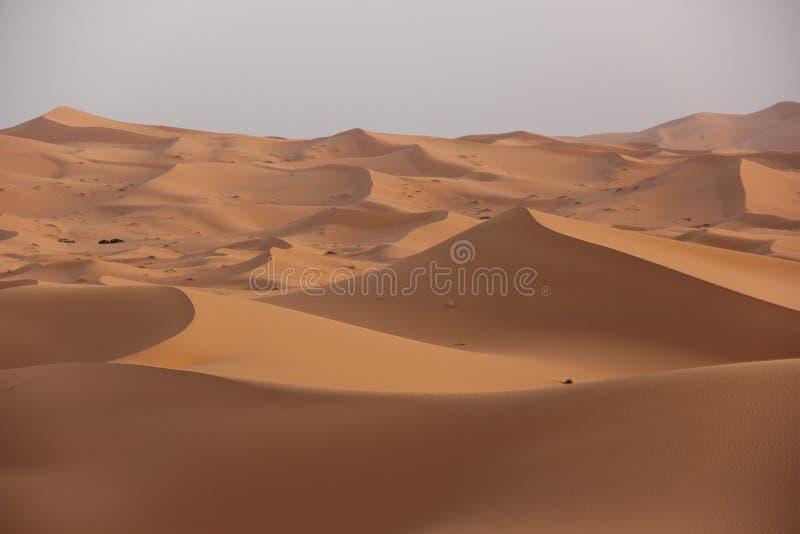 Deserto del Sahara fotografia stock