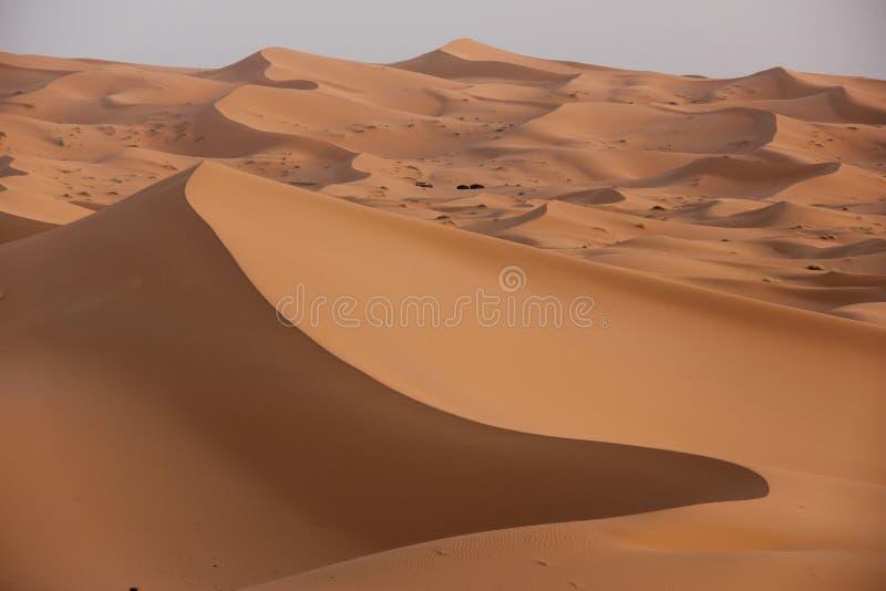 Deserto del Sahara fotografie stock
