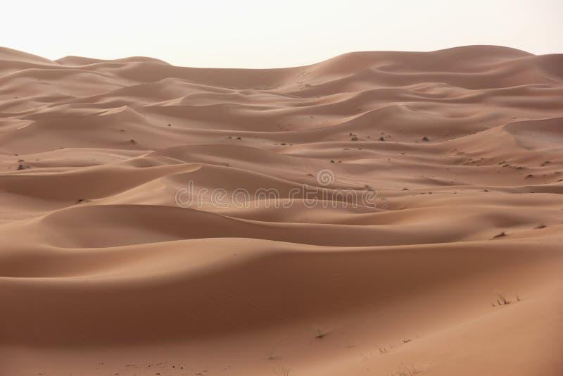 Deserto del Sahara immagini stock