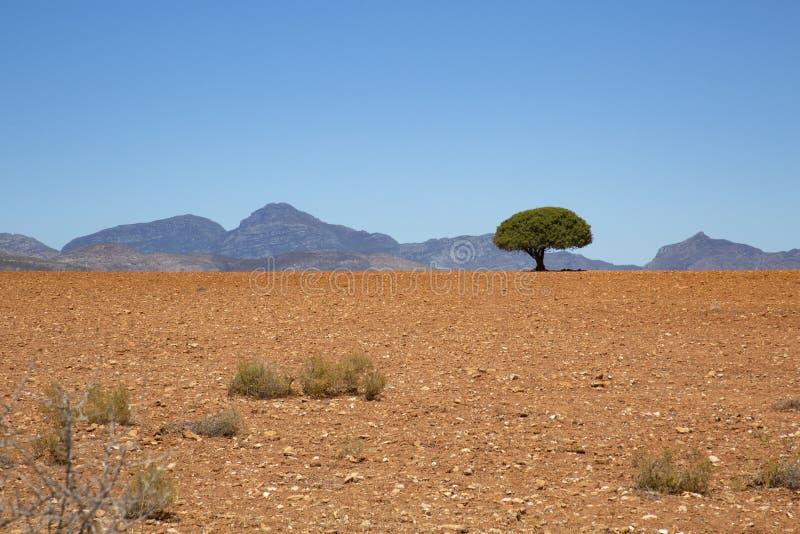 Deserto dell'albero fotografie stock libere da diritti
