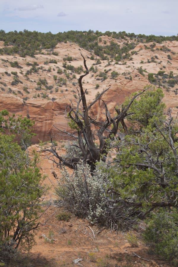 Deserto dell'Arizona immagine stock