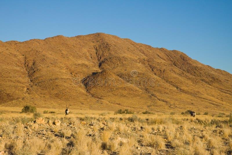 Deserto della Namibia fotografia stock libera da diritti