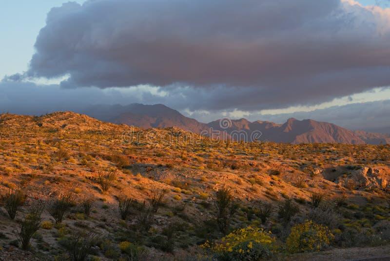 Deserto di Anza-Borrego ad alba immagine stock libera da diritti